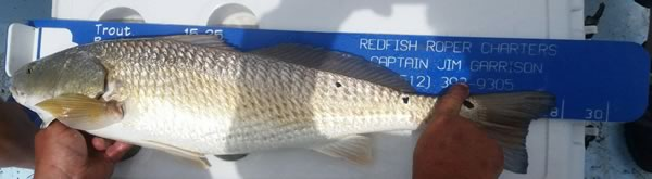 Redfish Fishing Guide